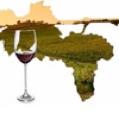 sistemi-territoriali-vitivinicoli